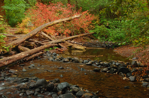 Color at the creek