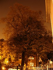 BIG ASS TREE (EMENFUCKOS) Tags: chicago tree nature night lights big shot