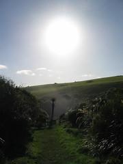Neuseeland (t_brunner2) Tags: blowhole sonne palme