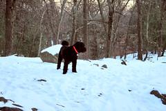 skippy on mountain top