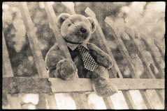Secret Spy Photograph Taken Of The Respected Security Expert Mr T. Bear Checking Out The Security Fence Before The Toronto G20 (Metrix X) Tags: toronto film xpro experiment failed nikonfm g20 kodak320t mrtbear xtol1140minat40cfollowedbyc41