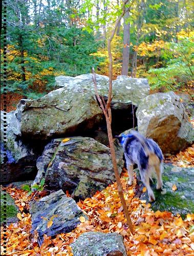danforth falls in the fall