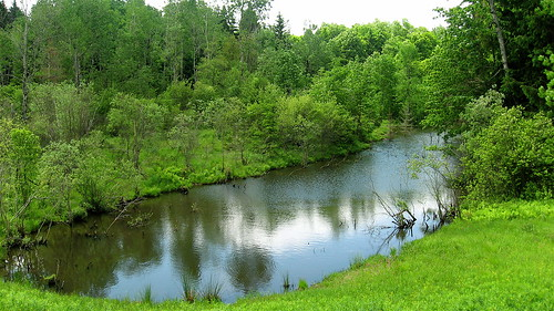 pond in Basswood forest