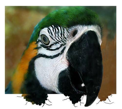 the beak by Franomilano