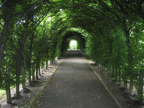 NYC - Staten Island - Sailors Snug Harbor: Staten Island Botanic Gardens - Allee by wallyg