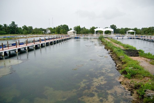Krabi Fish Farm