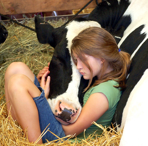 girls cow