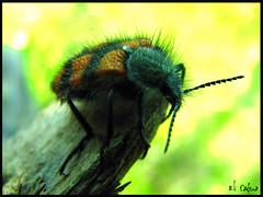 Funny day (Eli Funk) Tags: parque santiago naturaleza amigos color macro canon septiembre supermacro bicho 2007 s2 insecto pelitos mahuida pololo entomologia eeliyah elicadena expoobsesion