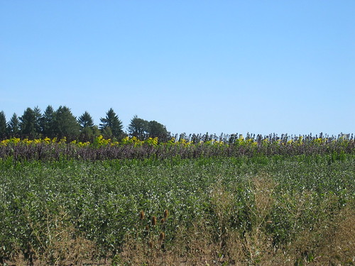 Nursery field on Jackson School Rd