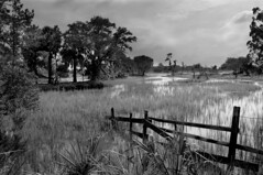 Marsh Fence (Sco C. Hansen) Tags: trees bw sc river scott blackwhite south tide scenic carolina marsh hansen beaufort lowcountry beaufortcounty scotthansen chisolmisland