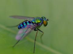 Fly (dpfunsun) Tags: plant gardens fly 100mm28macro pentaxk10d