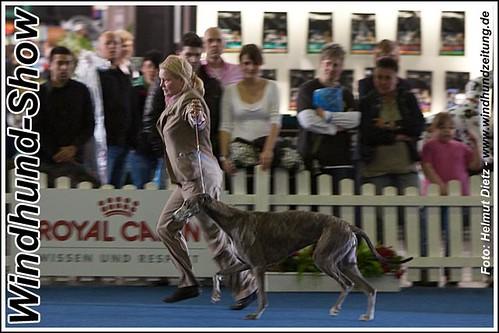 VDH - Hundeausstellung 2010 - Greyhound - BOB - ESA 2010