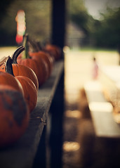 All in a row (A bunch of beans) Tags: autumn orange brown fall fence focus bokeh pumpkins coffeeshop burn vignette hss owp freeaction coffeeshoptutorial fenchfriday navyblueexclusionlayer happyfencedfriday happysliderssunday poppyspumpkinpatch cabinfeverphotographycontest