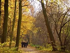 On a Walk (JoannaRB2009) Tags: wood autumn trees fall leaves forest path walk poland polska lodz d jesie centralpoland lasagiewnicki