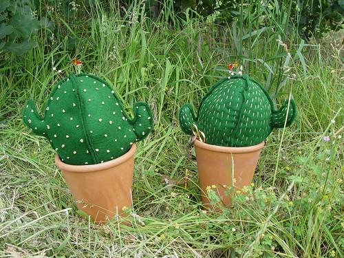 Kaktus-O-06