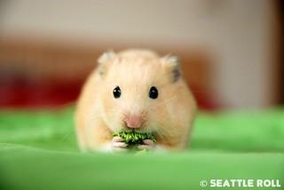 Broccoli Mustache *Niko*