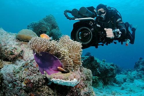 Filmando corales Palau