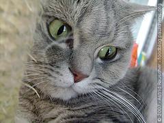 [Weekend Cat Blogging] - #112 Helpin momma