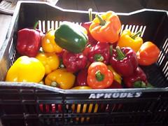 pimientos (MAU_08) Tags: peru vegetables flora spice selva peppers