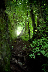Damp II (tommy martin) Tags: summer england green wet forest moss woods rainforest damp