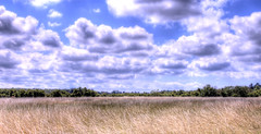 Olron island (* Thierry *) Tags: blue trees light sky france tree beach field grass clouds forest landscape island soleil lumire champs nuages hdr fort nauge foin 2007 oleron iledolron oleronisland beachofoleronisland plagedolron