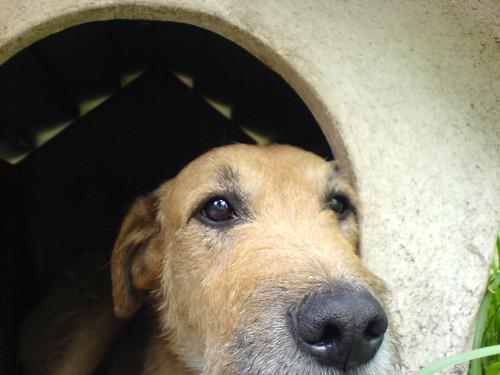 El perro Idi por saguayo, en Flickr