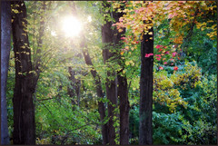 The setting sun through the trees - autumn (blmiers2) Tags: autumn trees red usa sun newyork tree green fall nature leaves yellow geotagged nikon redleaves settingsun d40x blm18 blmiers2
