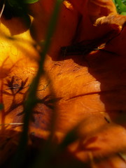 creepy cool (giolou) Tags: light shadow summer orange sun color macro texture nature mushroom outdoors weird with pennsylvania nothing naranja rhymes blorenge rhymeswithorange netneutrality matters2me