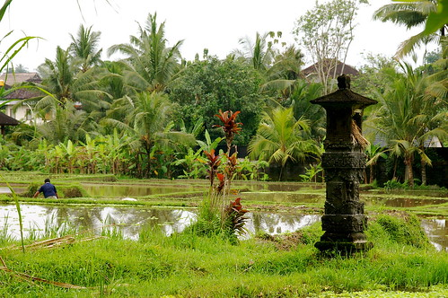 A back street in Ubud: rice, a shrine, tropical flowers.