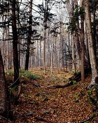 Treelot by Decew Falls (matt.manjos) Tags: autumn trees nature leaves forest slidefilm 4x5 ektachrome e6 largeformat toyo kodakektachrome decewfalls morningstarmill stcatharinesontario e6athome