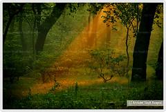 The Jungle feeling (Arvi - the wanderer) Tags: morning delhi newdelhi deerpark sigma18200mm arvinder canon40d arvindersinghrooprai