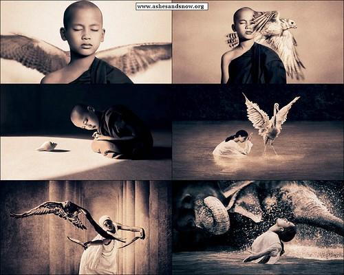 www.ashesandsnow.org_bestiary_monk_avian_elephant