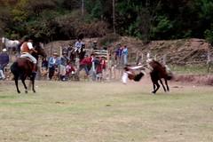 The Kisser (fayesta) Tags: travel horses horse fall argentina cowboys cowboy riding rodeo gauchos salta gaucho doma jineteada escoipe argentinatravel