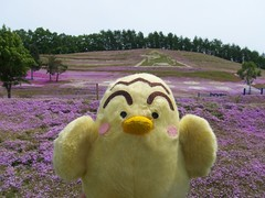 Shiba-zakura flower
