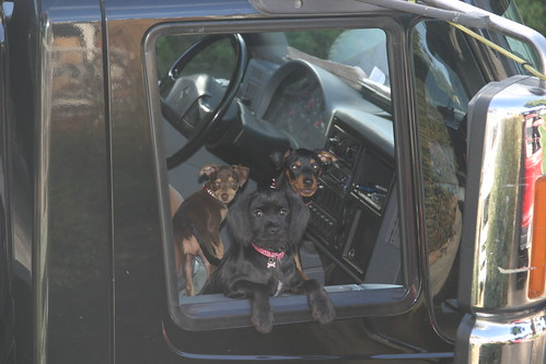 tow truck dogs