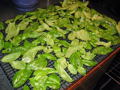 drying_basil_7_2007