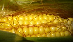 Msr (glah) Tags: corn msr dar diamondclassphotographer