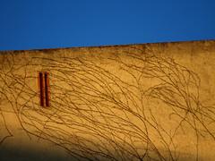 Climbing up the walls - by Gerard Girbes