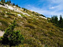 Looking up to summit of Mt Mastiff