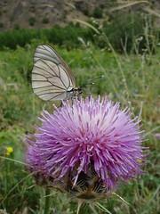 Life (kezwan) Tags: flower nature butterfly live kezwan