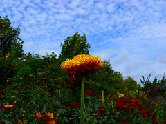 Summer is not over yet! (sbuliani) Tags: park blue sky flower london yellow clouds landscape lumix panasonic regentspark regents stefano dmcfz50 diamondclassphotographer flickrdiamond buliani sapessi stefanobuliani