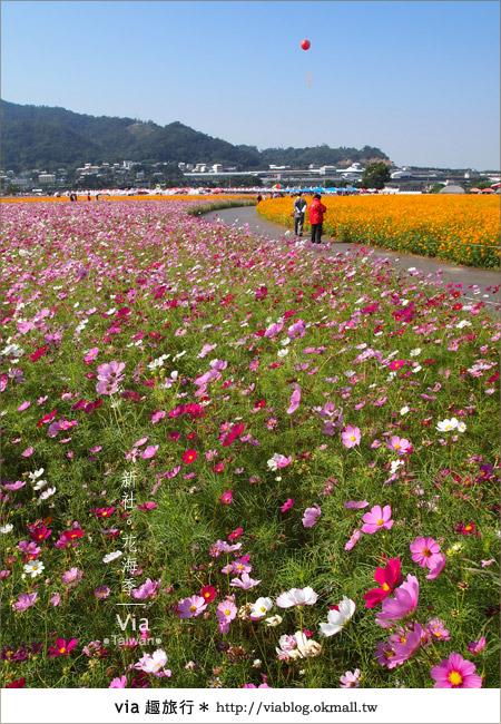 【2010新社花海】via帶大家欣賞全台最美的花海!4