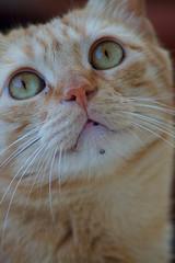 (Alessia Lo Surdo) Tags: cats animals cat felino felini gatto gatti animali baffi bestofcats