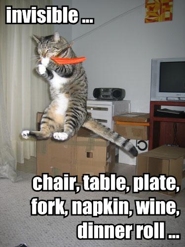 lol cat crazy