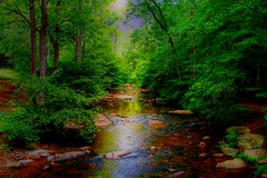 Enchanted Forest ( D L Ennis) Tags: mountains art water creek forest solitude blueridge enchantedforest dlennis