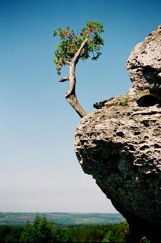 Čudno i usamljeno drveće - Page 2 1285470425_01c9ac8519