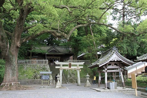 事任八幡宮-Kotonomama Hachimangu shrine