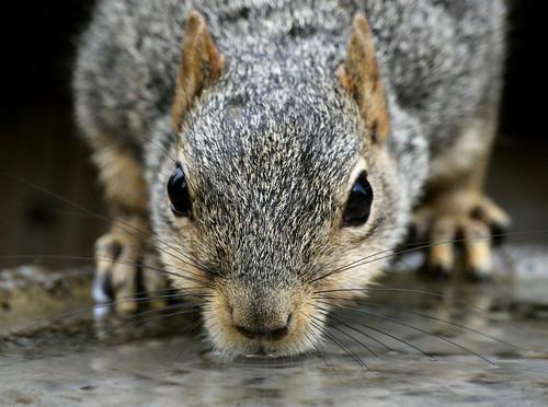 フリー写真素材, 動物, 哺乳類, リス科, リス,