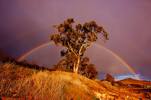 Rainbow through Gum tree by mick walters/Billy.