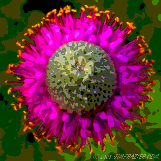 Purple Prairie Clover